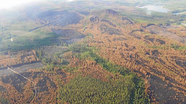 Helikopterbild över Ljusdal som tydligt visar brandens förlopp med helt sotsvarta områden, skog med bruna kronor och även områden med gröna kronor som klarat sig från branden.