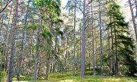Skogsskyddet granskas