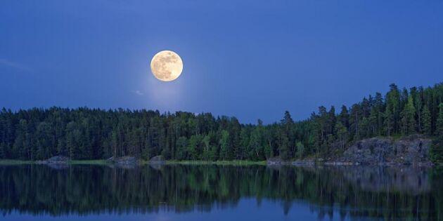Svensk natur i klass med Amazonas