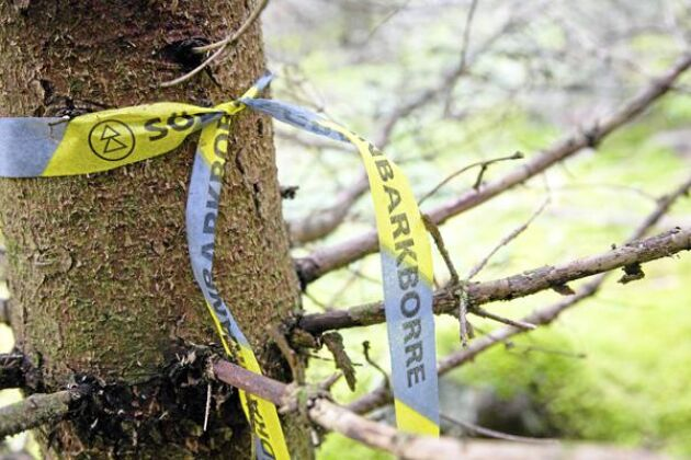 De barkborreangripna träden märks upp.