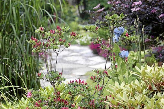 Camilla Daher är ägare till en av fem vackra trädgårdar som visas i Värnamo under Öppen Trädgård 2018.