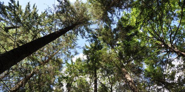Rekordpriser på skogsmark trots corona