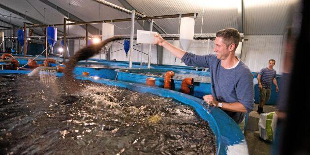 Gårdsfisk får kvalitetscertifiering