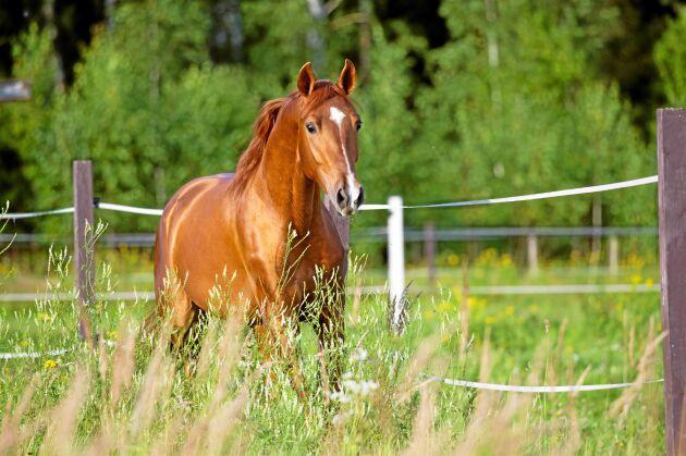 Skåne är ett av landets hästtätaste regioner med 58 100 hästar.