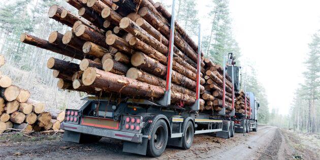 Råden till skogsägarna när marknaden svalnar