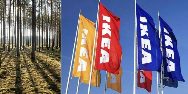Ikea storägare i Lettlands skogar