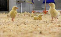 Kronfågel fälls för klimatpåstående