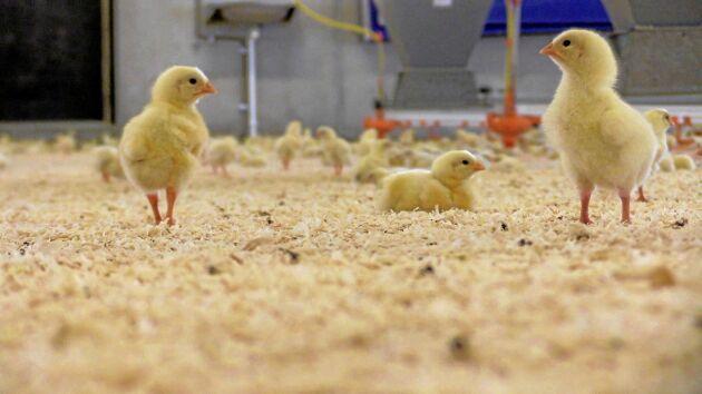 Kycklingar ger inte klimatvänlig färs, konstaterar Reklamombudsmannen.