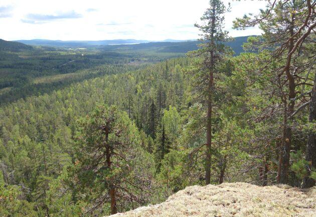 Lillskardbergets naturreservat, Lycksele kommun, Västerbottens län.