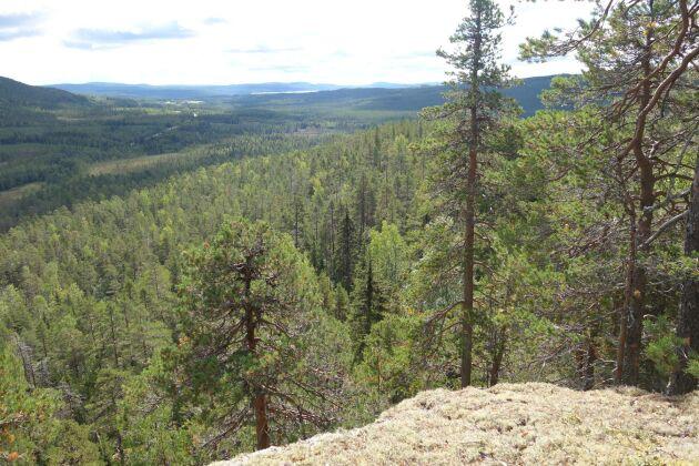 Det är dags att vi skogsägare får betalt för den klimatnytta vi gör, skriver krönikören.