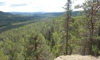Skogsförsäkringen som saknas