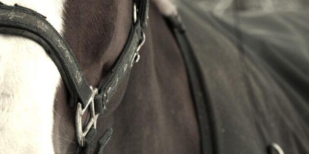 Sålde en annans häst