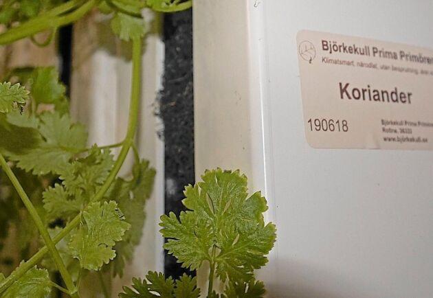 I Björkekull produceras bland annat koriander.