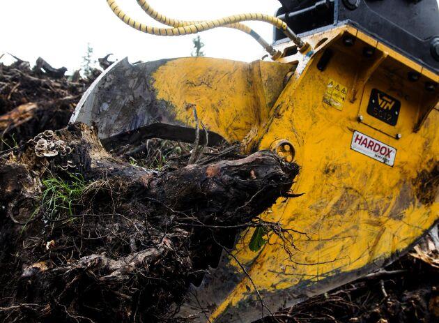AMAS Svenska AB presenterar en helt ny stubbklipp för skörd och brytning av stubbar.