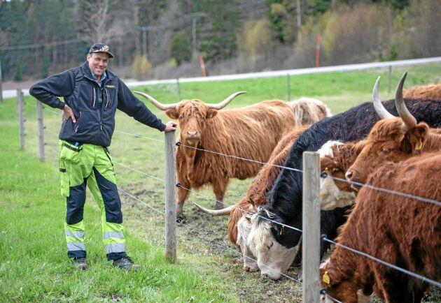 Wiggeby Jordbruks besättning med Highland cattle lockar många förbipasserande att stanna bilen och ta sig en närmare titt på djuren, berättar Håkan Eriksson.