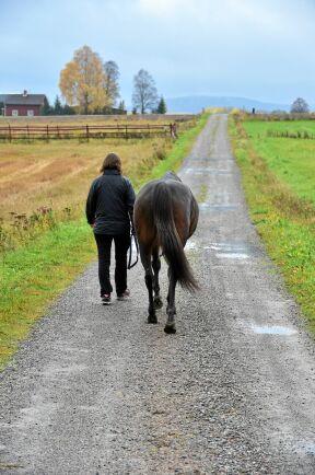 Promenader kan både förhindra och lindra kolik.