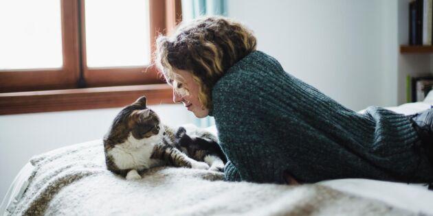 5 tecken på att din katt kan vara deprimerad – och så hjälper du