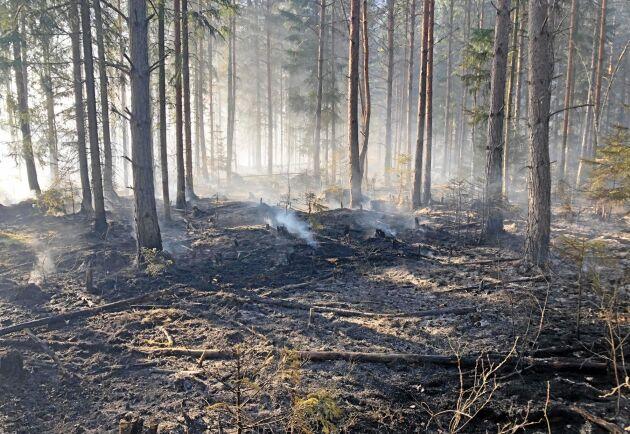 Skogsbränderna har ofta anlagts på kvällarna.