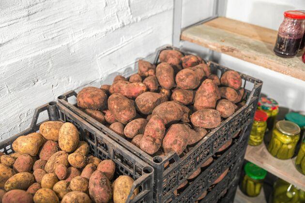 Matkällare, perfekt för potatislager.