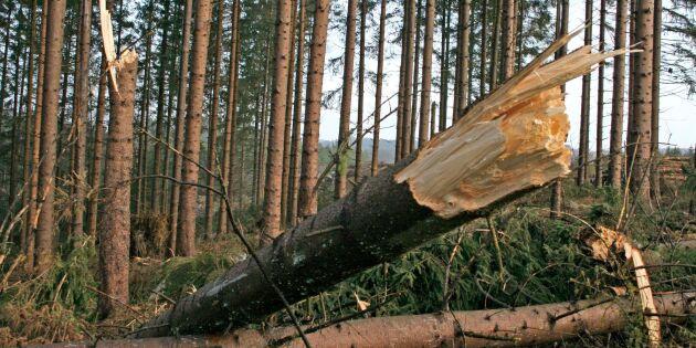 Så kan skogsägare skydda skogen mot ökade risker