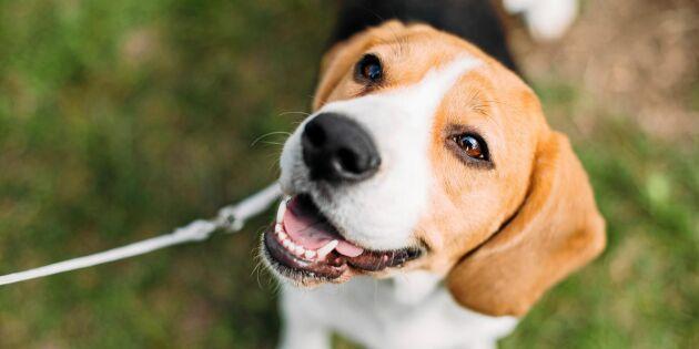 10 viktiga signaler som visar vad hunden vill