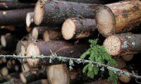 """""""Uppgiften är att lyfta fram det hållbara skogsbruket"""""""