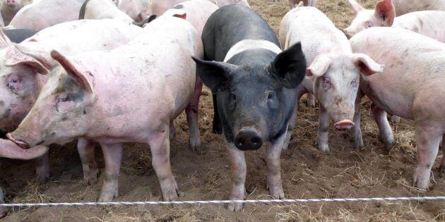 Så förhandlar du fram bästa grispriset