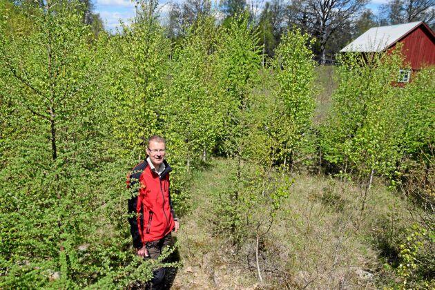 I det här hägnet nära gårdens hus har Lars Johansson planterat bland annat lärk och björk.