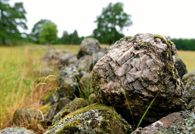 I stenrösen går det att hitta mycket vulkanrester.