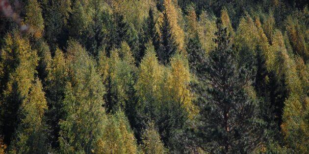 Mindre skogsägare är mycket välkomna i FSC