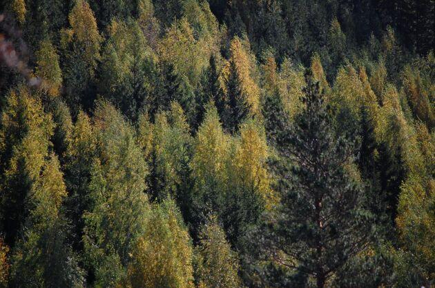Även mindre skogsägare är välkomna i FSC, skriver debattören.