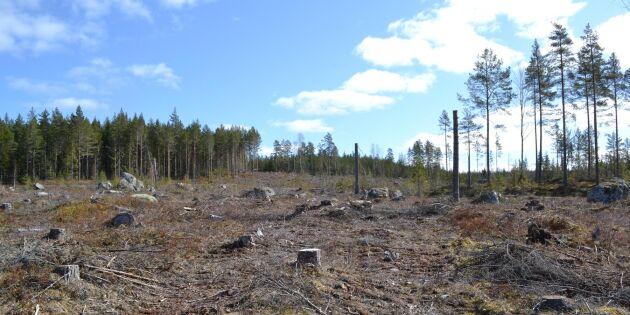Gör skillnad på riktigt i svensk skogspolitik, Centerpartiet!