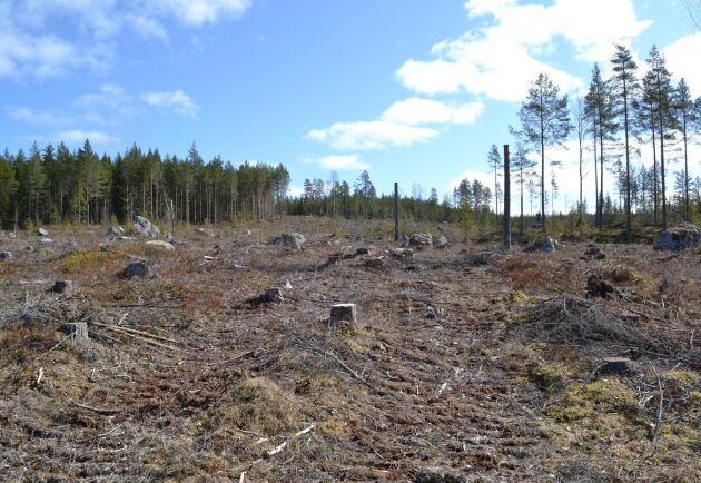 Centerpartiet måste gå från ord till handling i skogspolitiken, skriver tre moderater.