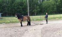 Försvunnen häst hittad död vid sjö