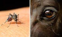 SVA letar främmande virus