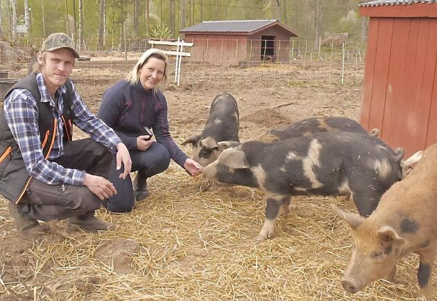 Johan Segergren och Anne Larsen planerar att utöka köttproduktionen på Stenbo gård.