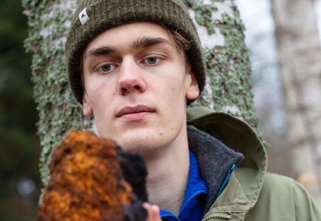 I stället för 300 kronor kubiken för björkmassaved ger sprängtickan 350 kronor per kilo. Om åtta år hoppas Axel Johansson kunna skörda 750 kilo per hektar, och bästa fall blir det en skörd till åtta år senare.
