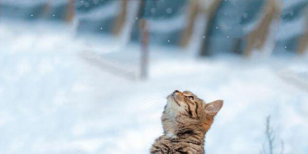 Här är kattens hemligheter – 28 coola kattfakta