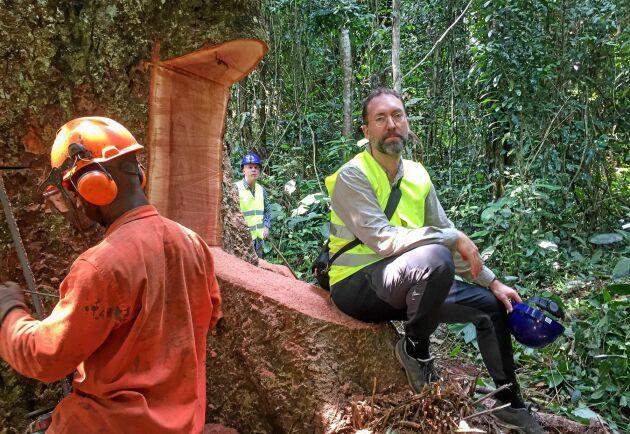 Olle Forshed, expert på regnskog på WWF, anser att man kan rädda regnskogen genom att hugga den.