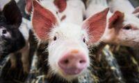 Färre djurskyddskontroller under pandemin