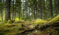 """""""Bekämpa barkborrar i skyddad skog kräver särskild hänsyn"""""""