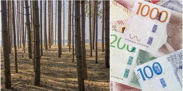 Svenska pensionärer gynnas av skogsaffärer i Lettland
