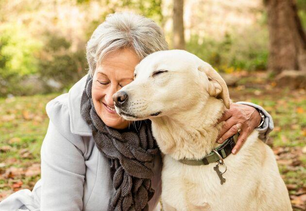 Många goda år med hundvännen börjar med omsorg om hälsan tidigt. Så här tar du hand om den åldrande hunden!