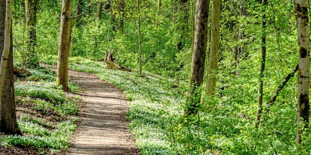 Därför blir du frisk av skogen – 3 bevisade hälsoeffekter