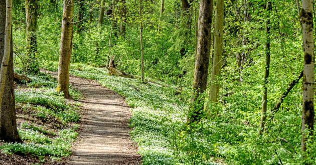 Ute i skogen hittar man lugnet!