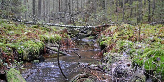 Satellitövervakning avslöjar finskt skogsfusk