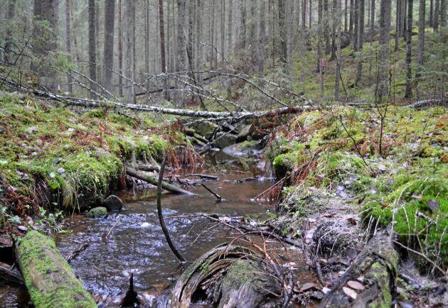 Sedan Finland införde satellitövervakning har fler avverkningar i viktiga livsmiljöer, till exempel i närheten av vattendrag, upptäckts.