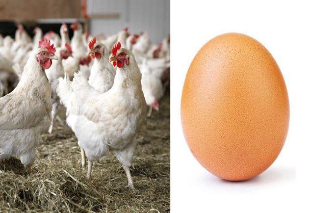 Ett ägg från den brittiska hönan Henrietta slår rekord i flest likes på Instagram.