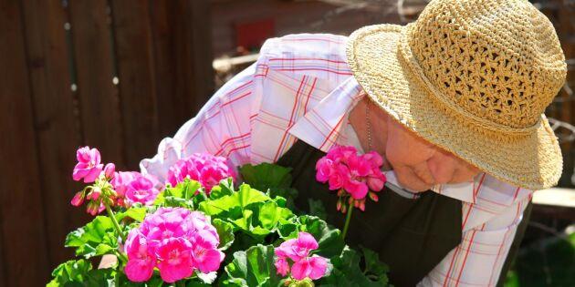 Odling ska gynna äldre