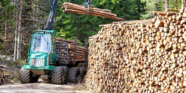 Hållbart att bruka skogen på rätt sätt